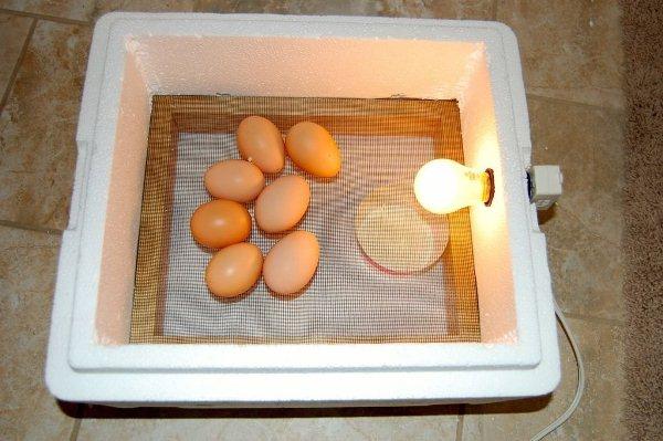 Επωαστήρας αυγών πολυστυρενίου