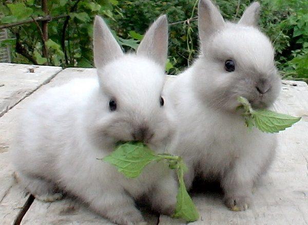 Τι να τρώμε κουνέλια