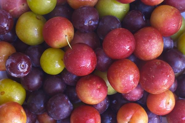 Επιλέξτε τις καλύτερες ποικιλίες δαμάσκηνων για καλλιέργεια ανάλογα με τα χαρακτηριστικά