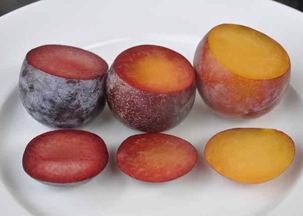 Τα πιο ασυνήθιστα υβρίδια του βερίκοκου, του ροδάκινου, του δαμάσκηνου και του μήλου, την περιγραφή, τα πλεονεκτήματα και τα μειονεκτήματά τους