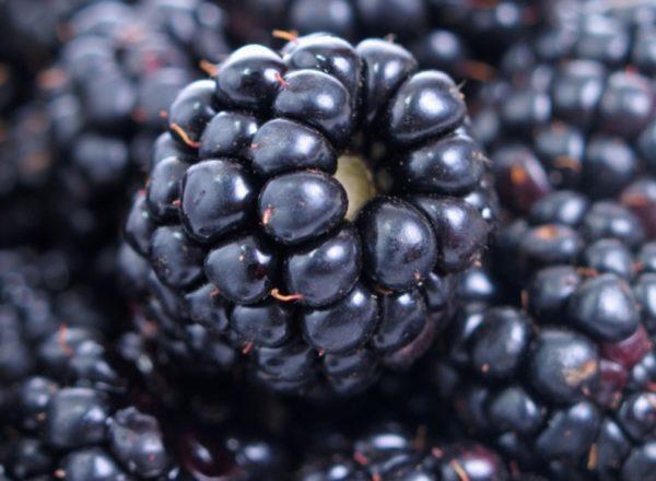 Σύνθεση, χρήσιμες ιδιότητες και αντενδείξεις βατόμουρου, ιατρικές συνταγές και συνταγές μαγειρικής