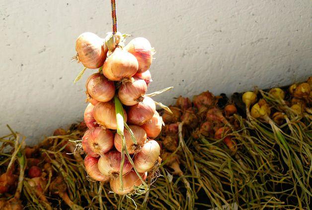 Πώς να αποθηκεύσετε τα κρεμμύδια