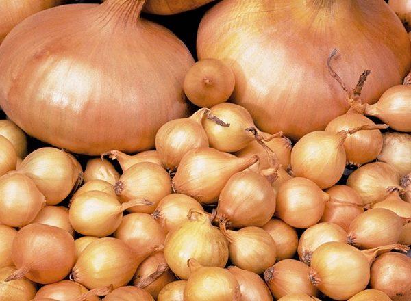 Φύτευση κρεμμύδι γογγύλια από sevka