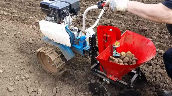 Φύτευση περιπατητή πατάτας