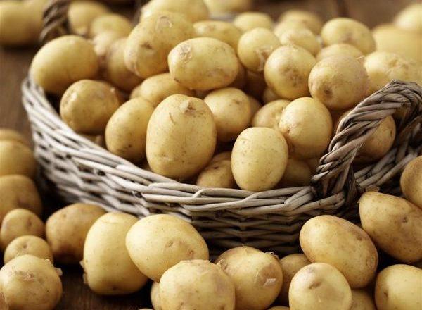 Πρώιμες ποικιλίες πατάτας