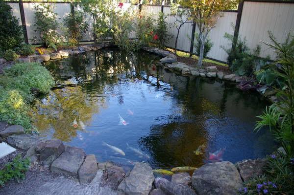 Λίμνη ψαριών