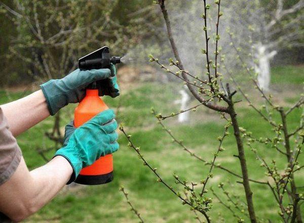 Βορικό οξύ για τα φυτά