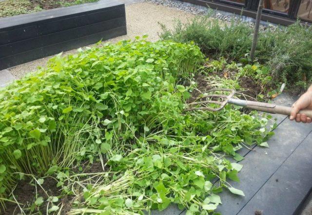 siderata στον κήπο