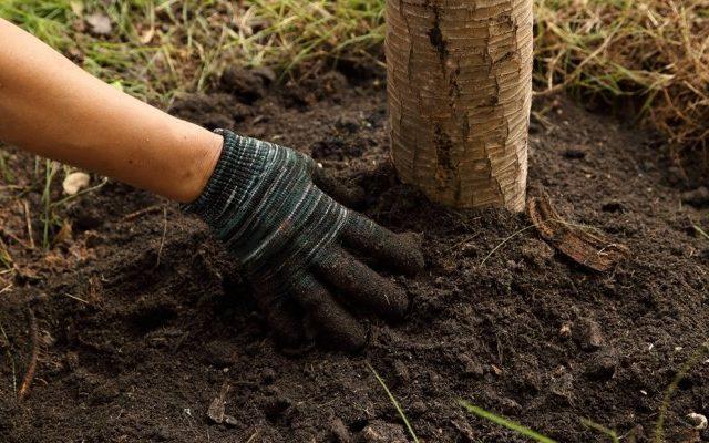 τροφοδοσία οπωροφόρων δέντρων το φθινόπωρο