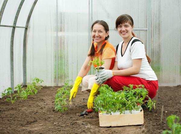 Τα φυτά μεταμοσχεύσεως στα θερμοκήπια αρχίζουν στα τέλη Απριλίου