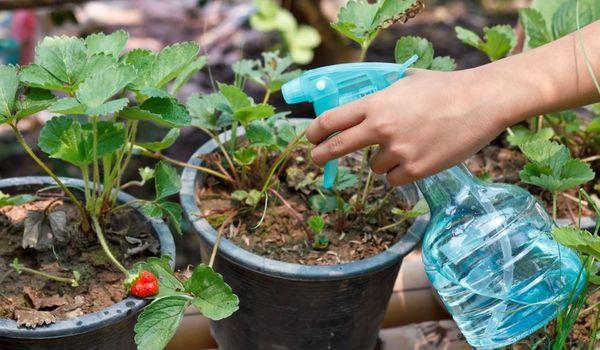 Η χρήση θειικού μαγνησίου για τα φυτά