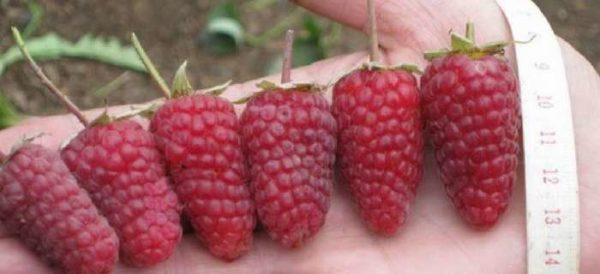 Το καπάκι του Raspberry Monomakh διαφέρει στο μεγάλο μέγεθος