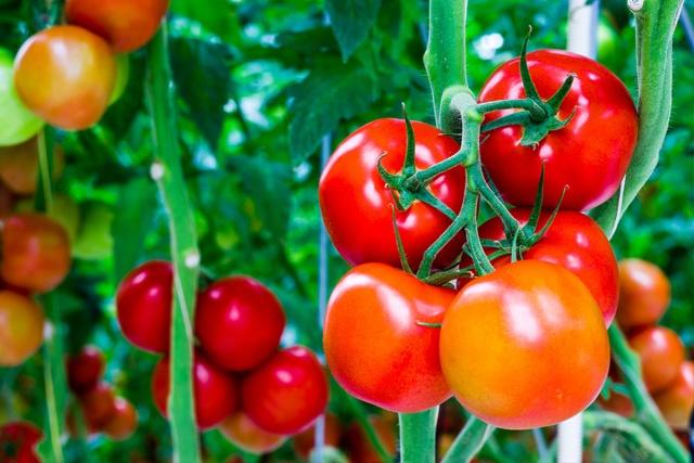 Μάσκαρα από ντομάτες