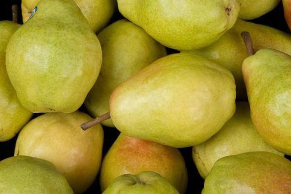 Ποικιλία των Veles Pears