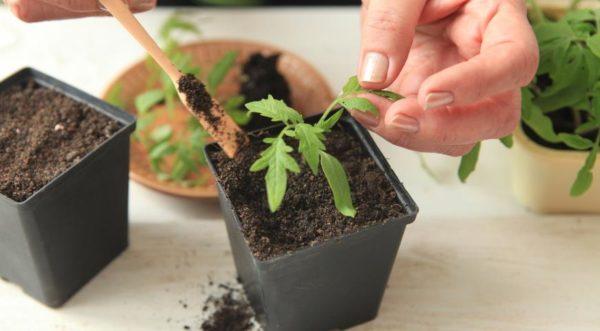 Με την κατάλληλη προετοιμασία του εδάφους δεν απαιτούνται φυτά