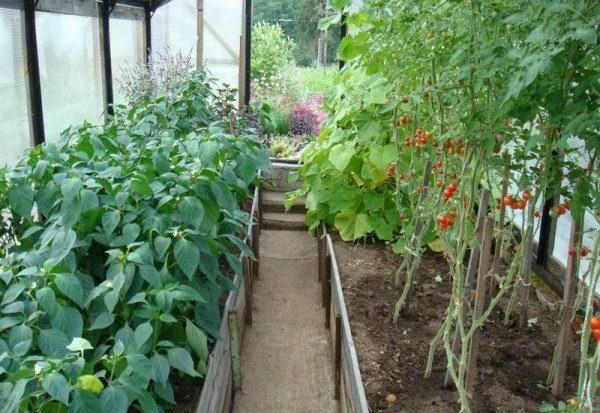 Ντομάτες και πιπεριές